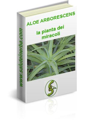 Aloe Arborescencens