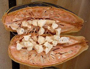 Frutto di Baobab
