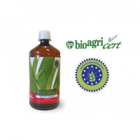 Aloe: tutte caratteristiche, benefici e indicazioni per il succo di aloe vera