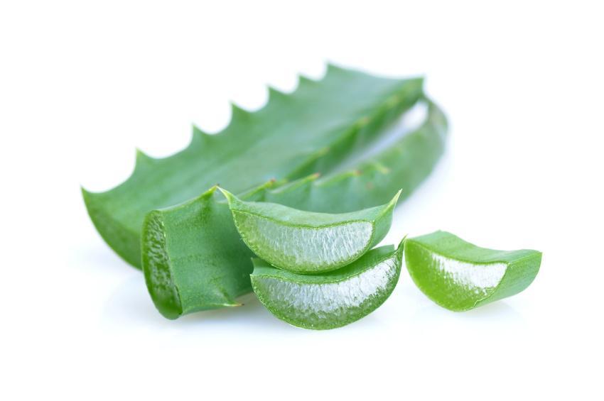 Il preparato di Aloe Arborescens con foglie fresche