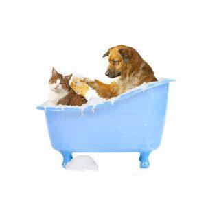 prodotti per cani e gatti