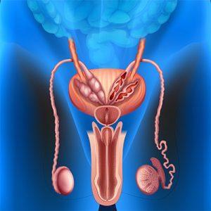 zinco colloidale aumenta libido prostata disfunzione erettile
