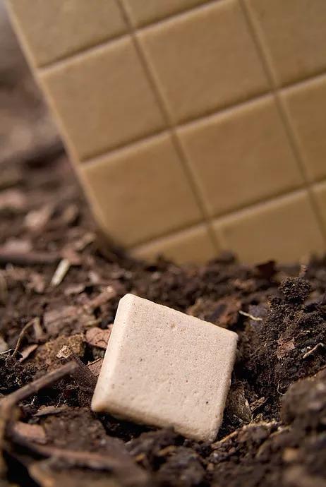 Chicza è il chewing gum naturale totalmente biodegradabile