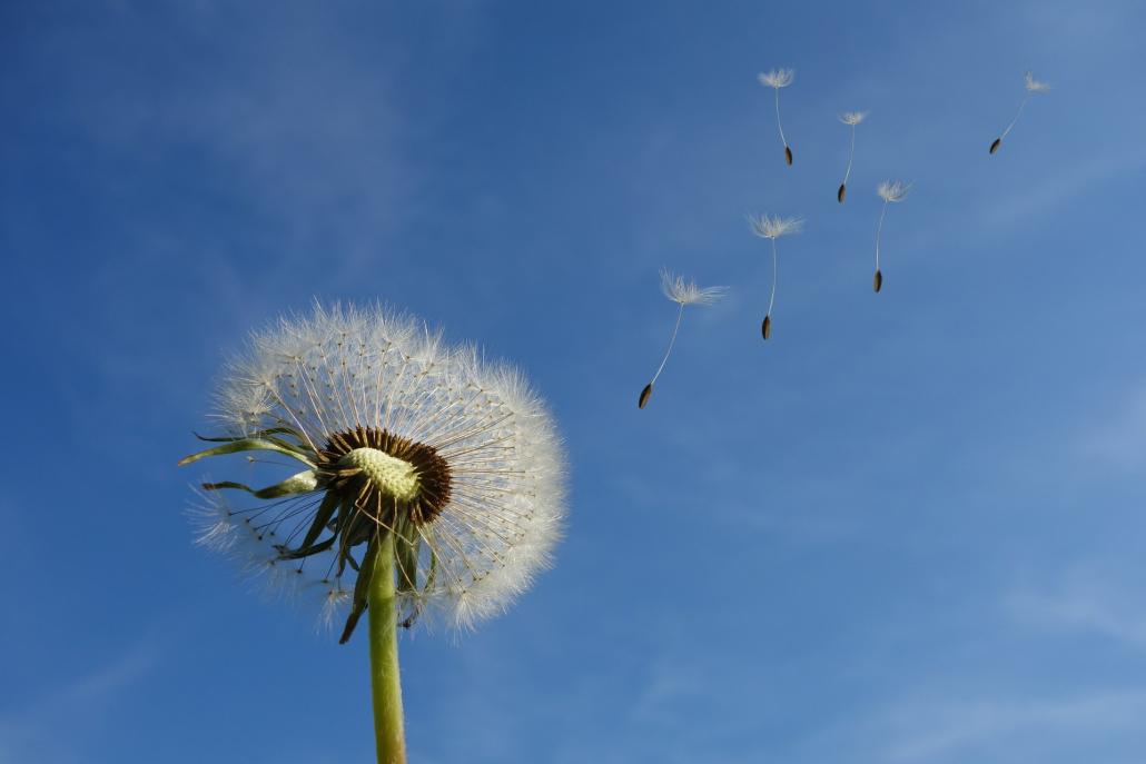 Rimedi naturali contro le allergie stagionali
