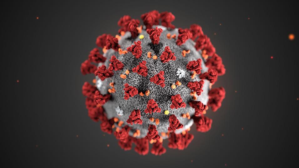 miele di manuka e coronavirus