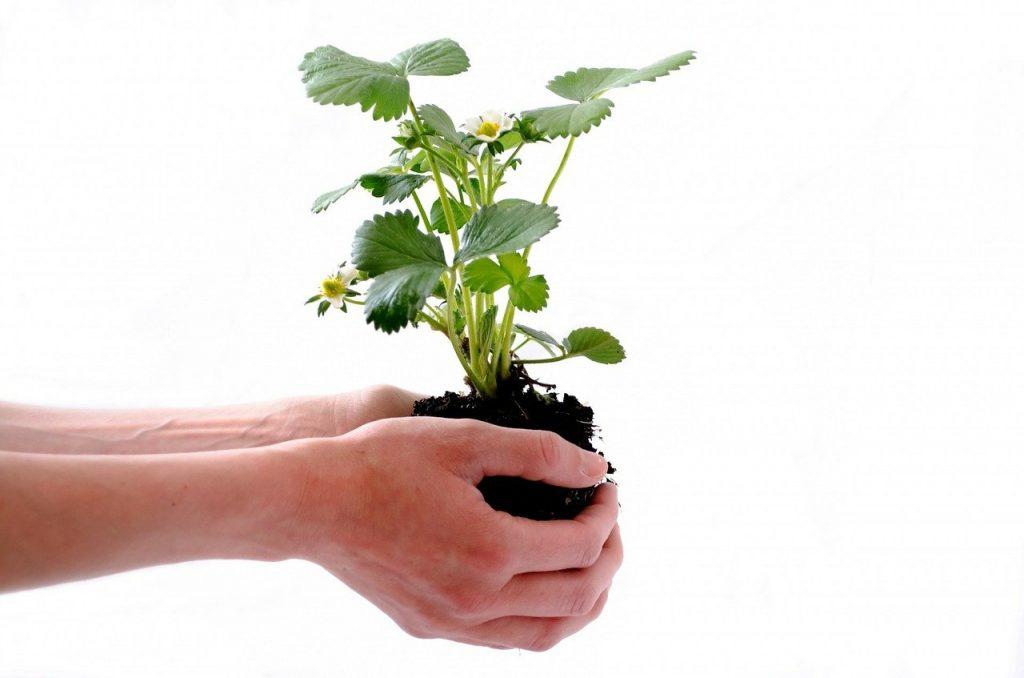 regali di natale per l'ambientalista