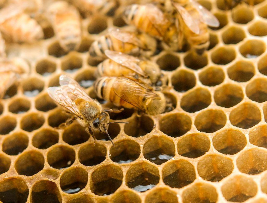 Le differenze tra il miele di Manuka e gli altri mieli