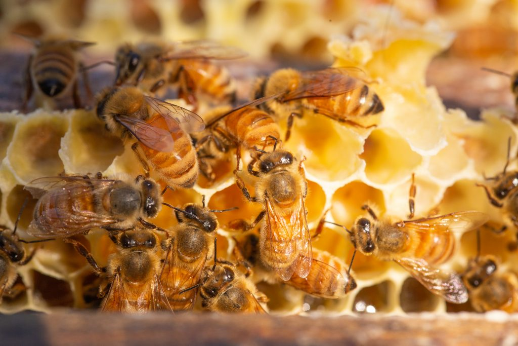 Miele di Manuka è un ottimo romedio naturale per tosse, mal di gola e raffreddore