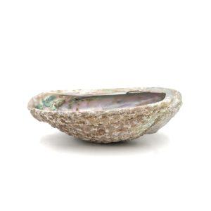 Conchiglia di Abalone per smudge di salvia bianca